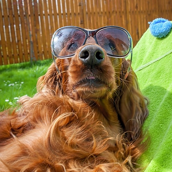 Photo competition - Your dog on holiday